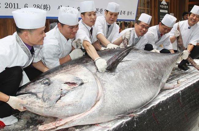 6 Lợi ích của Cá Ngừ đối với sức khoẻ