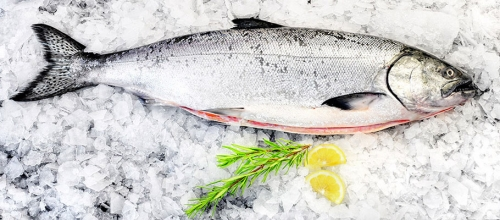 Những điều bạn nên biết về Cá Hồi