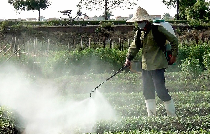 Người Việt  'đầu độc'  người Việt như thế nào