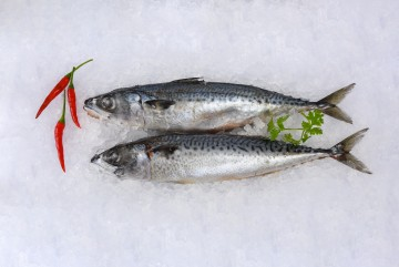 Frozen Saba Fish